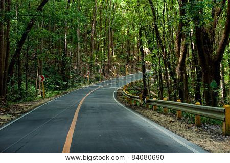 Asphalt Road At Mangrove Forest