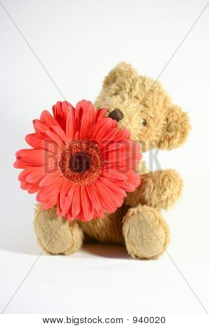 Teddy Bear With Gerbera Daisy