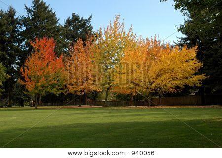 Park Bäume