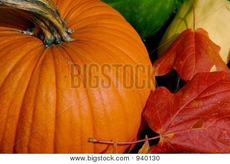 Pumpkin And Maple Leaf