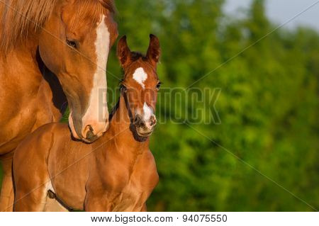 Horse with his baby