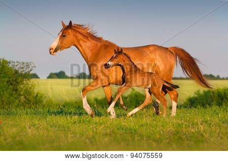 Two beautiful horses run
