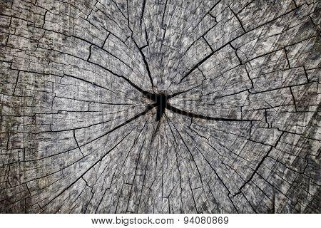Grey Cut Wood Closeup