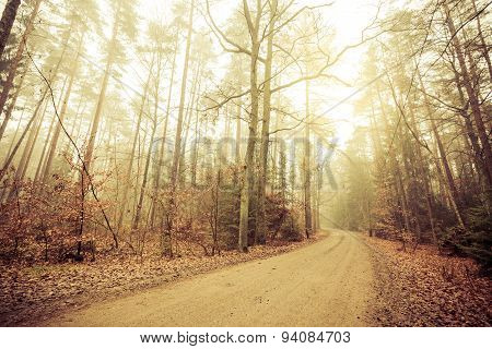 Pathway through the misty autumn forest on foggy day. Autumnal scenery beauty landscape. Fall trees and leaves. poster