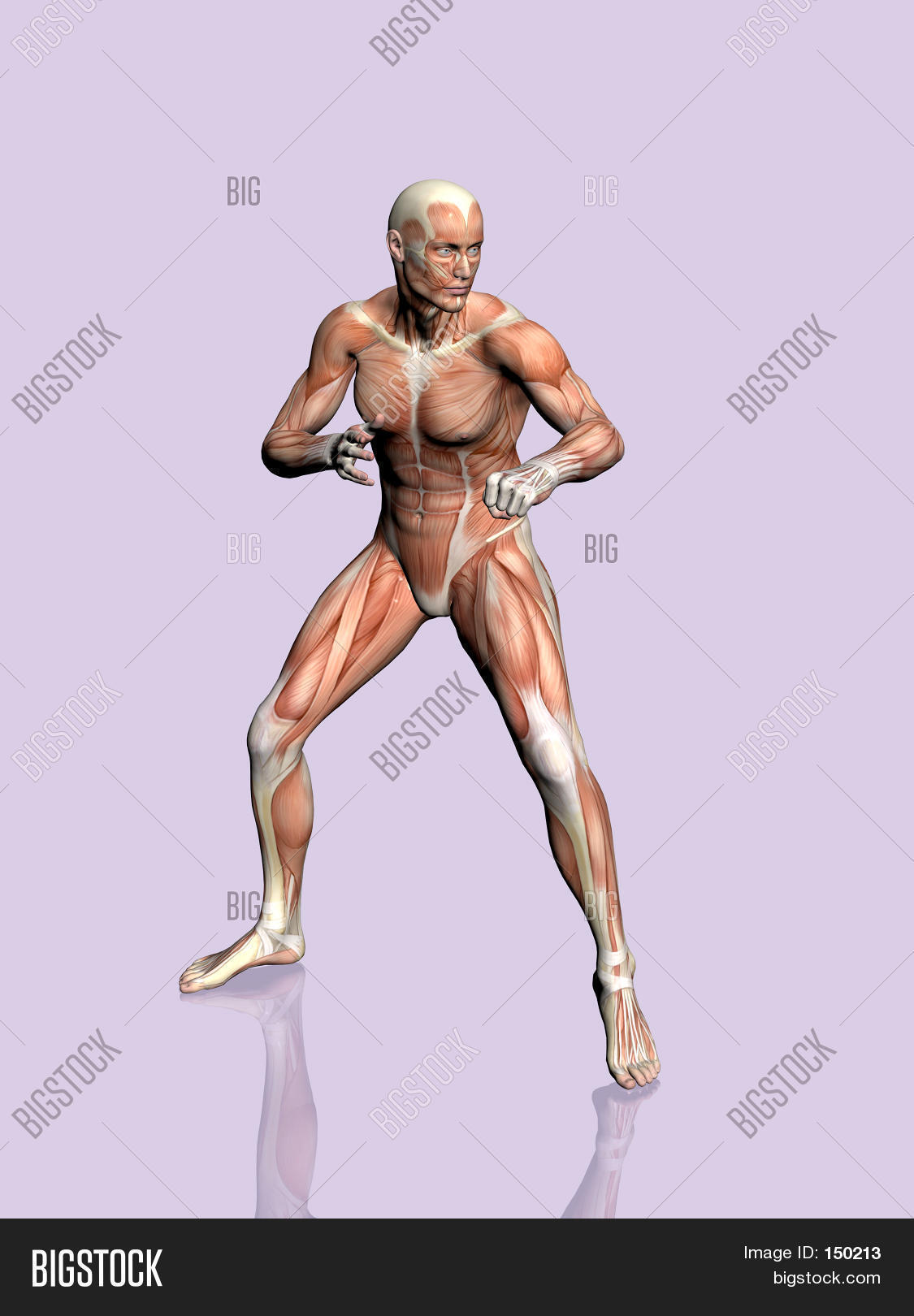 Anatomy Man Image Photo Free Trial Bigstock