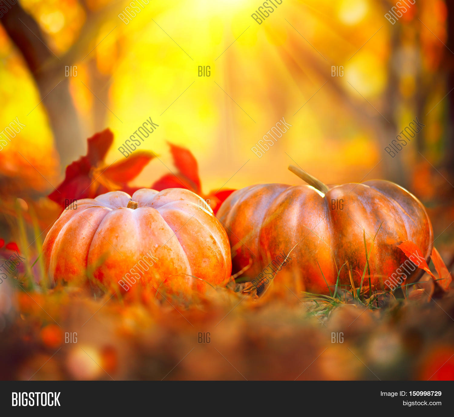 Autumn Halloween Image Photo Free Trial Bigstock