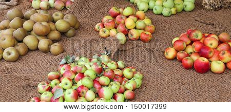 Many Apples Of Many Type In Autumn