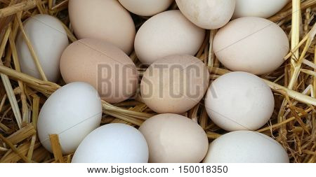 fragile fresh chicken eggs  in the basket with straw