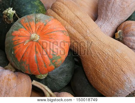 Bunch Of Many Mature Edible Gourds For Sale