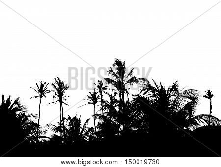 Plam trees photo in black color isolated in white background.