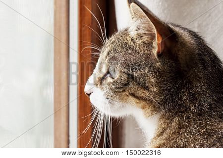 Cat looking outside a window horizontal image