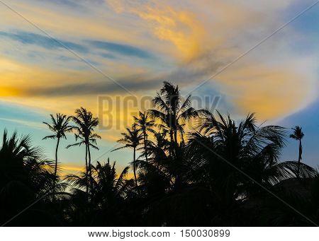 Palm Trees And Sunset Sky Jericoacoara Brazil