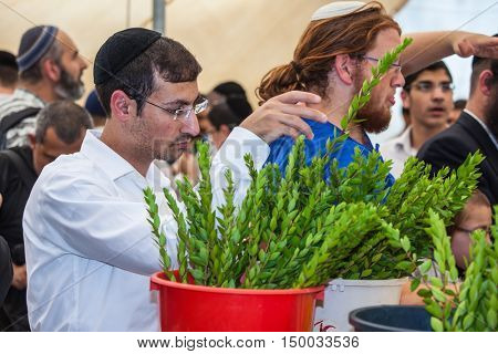 JERUSALEM, ISRAEL - OKTOBER 8, 2014:  Young religious man in black skullcap carefully chooses ritual  myrtle - adas. Traditional market before the holiday of Sukkot