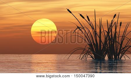 Water plants at sunset - digital artwork.3D rendering