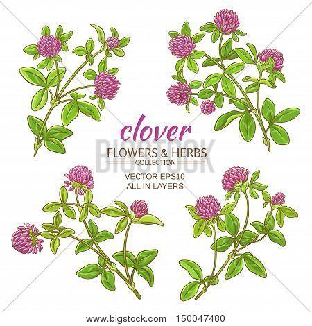 clover flowers vector set on white background