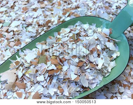 Many small pieces of broken eggshells on a green shovel in closeup