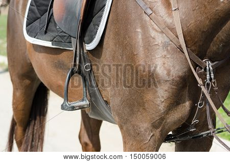 dressage horse and rider jumpig show legs
