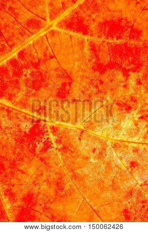 Dry orange autumn leaf texture close up