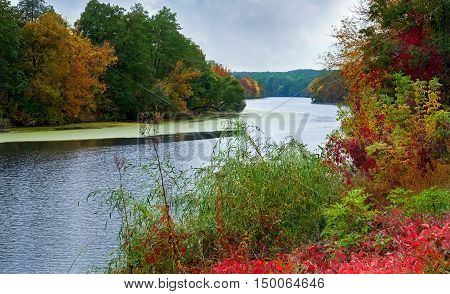 Autumn landscape of a calm river and the wooded shores with colorful foliage on a cloudy day.