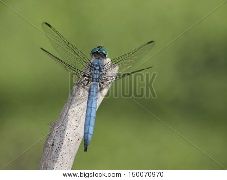 a dragonfly on a stick out in nature
