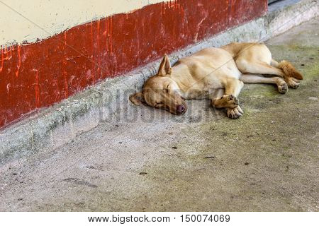 Adorable lazy dog is taking a nap