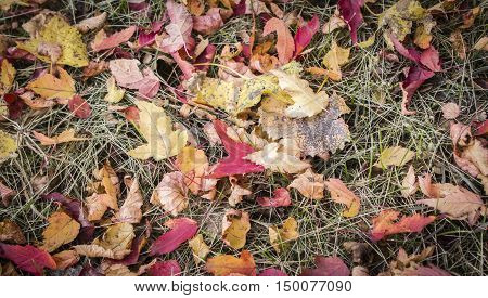 horizontal image of colourful fall leaves scattered on the ground filling the whole image great for a background image.