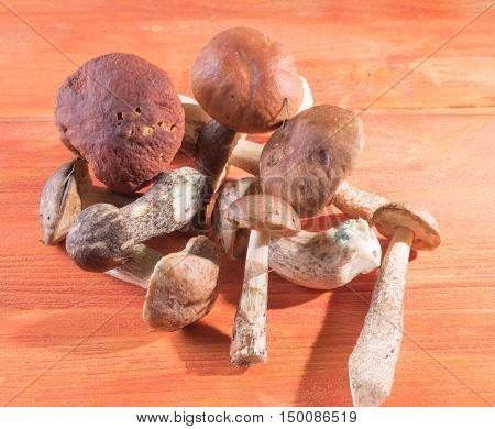 A bunch of fresh mushrooms lying on wooden background