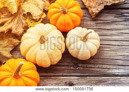 Autumn ornamental pumpkins with leaves on wooden boards