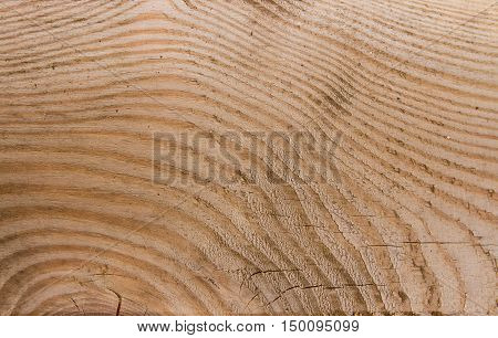 plank texture bright beige color closeup, macro