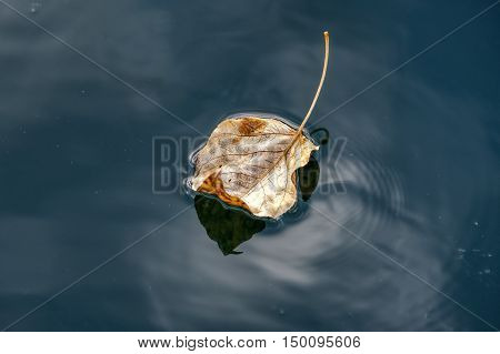 Close up of leaf on water. A fine art image of a yellow leaf floating in calm water.