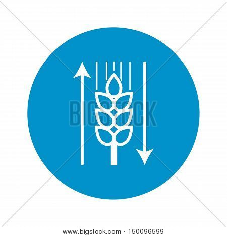 ear of wheat icon on white background for web