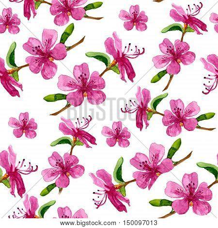 Flower of Labrador tea Ledum in seamless pattern