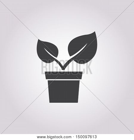 sprout icon on white background for web