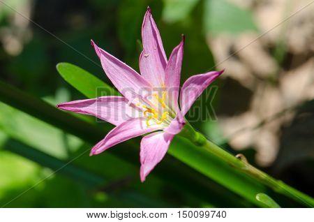 Lotus soil, purple, beautiful, blur, cool, moist.