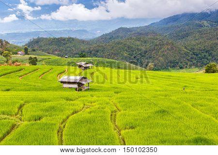 Green Terraced Rice Field in Pa Pong Pieng Mae Chaem Chiang Mai Thailand