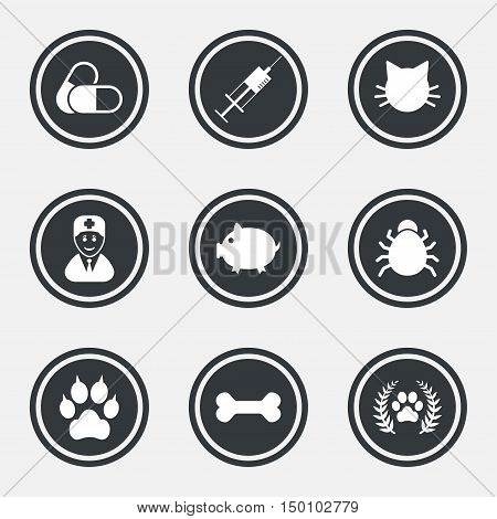 Veterinary, pets icons. Paw, syringe and bone signs. Pills, cat and doctor symbols. Circle flat buttons with icons and border. Vector
