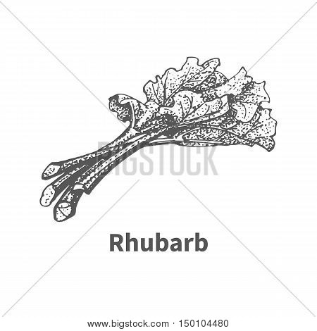 Vector illustration doodle black and white hand-drawn rhubarb. Isolated on white background. The concept of harvesting. Vintage style. Plant with the inscription.