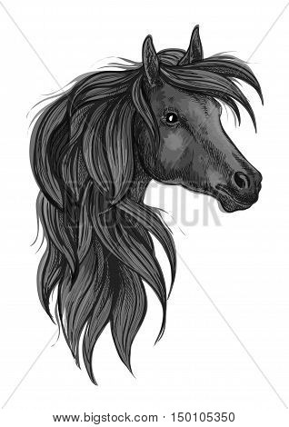 Sketch of black purebred horse. Head of black arabian racehorse with long wavy mane. Horse racing symbol, equestrian sport badge or t-shirt print design poster