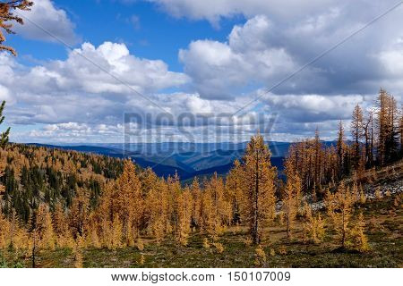 Yellow trees under blue sky and clouds. Frosty Mountain. Hope. Manning Provincial Park. British Columbia. Canada.