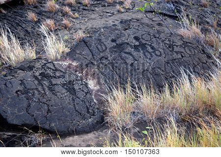 Puu Loa Petroglyphs on Chain of Craters Road in Hawai'i Volcanoes National Park