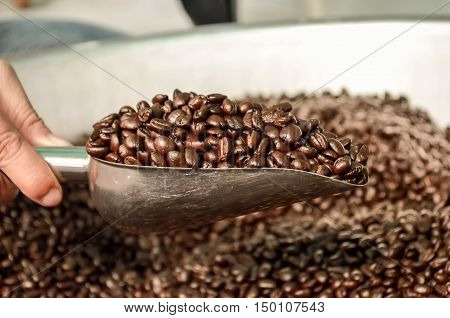 coffee coffee bowler coffee bean color art Roasted coffee beans