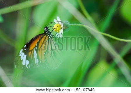 butterfly and small flower in the big forest.