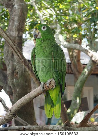 closeup image of a green macaw parrot perched on a tree limb