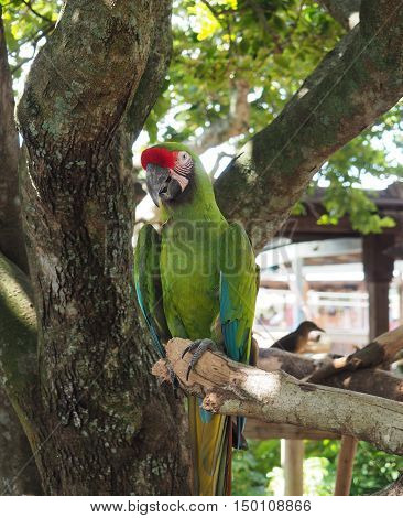 green macaw parrot perched on a tree limb