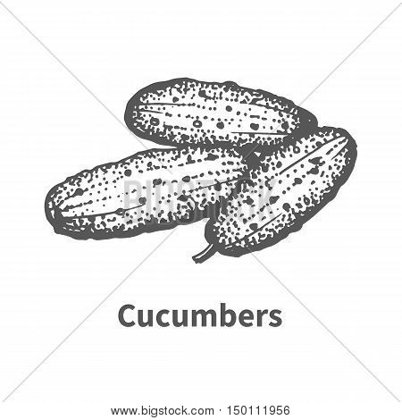 Vector illustration doodle black and white hand-drawn cucumbers. Isolated on white background. The concept of harvesting. Vintage style.