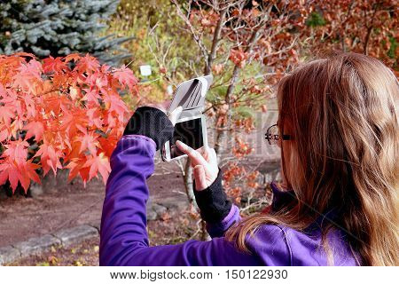 Woman taking picture of colorful leaves in autumn park.