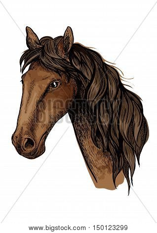 Brown racehorse sketch with head of purebred mare horse of arabian breed. Horse racing, equestrian sporting competition symbol or t-shirt print design