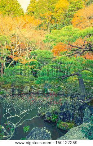 Autumn forest with river ( Filtered image processed vintage effect. )