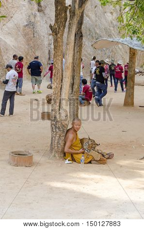 KANCHANABURI, THAILAND - NOVEMBER 9 :Monk sits on the floor with big tiger at the Buddhist Tiger Temple on November 9, 2014 in Kanchanaburi. Buddhist monks and volunteers care for the tigers.