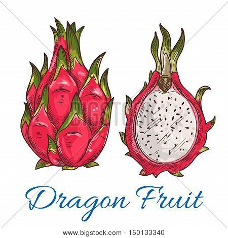 Sketch of tropical dragon fruit. Exotic pink pitahaya fruit with green leaves on the top. Tropical cocktail recipe, juice packaging design